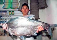 夏季水库鳊鱼怎么钓用啥饵料?