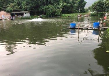 金鸡咀钓鱼场