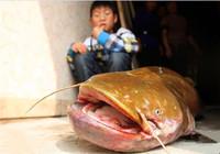 浅谈夏季鲶鱼钓法与用饵思路